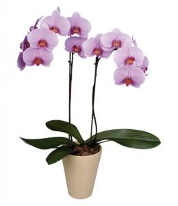 Фото орхидеи в коробке