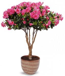 Фото комнатного цветка