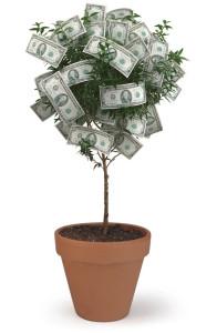 Фото денежного дерева