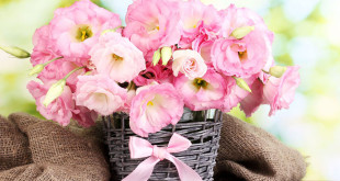 kakie-cveti-podarit-devushke